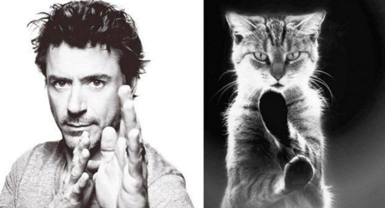25 gatos que podrían ser modelos