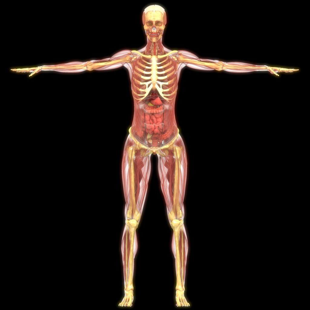 la vitamina d impacta tejidos y órganos