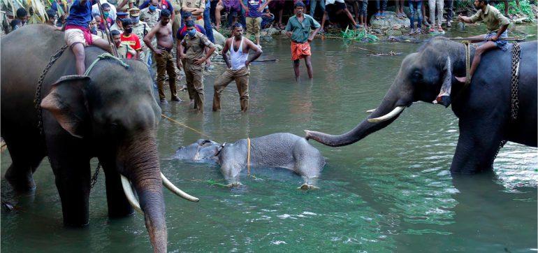 Muere-elefanta-embarazada-india-explosivos