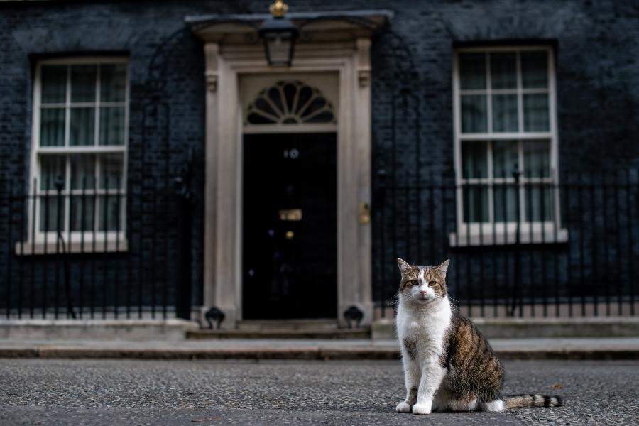 larry es el gato que cuida 10 downing street en londres