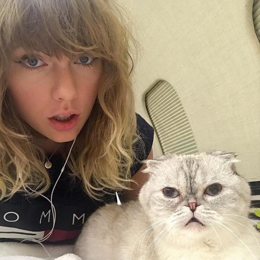 taylor swift tiene tres gatos