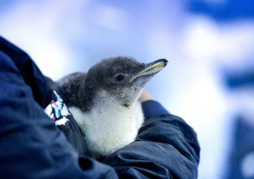 alex pingüino