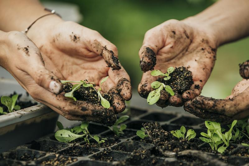 Proyectos e iniciativas para cuidar al planeta